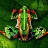 Look Close, That Is Not Just Any Frog.  Amazing Body Art
