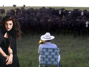 Watch What Happens When A Bunch Of Cows Hear Royals By Lorde