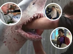 Cruel, Unusual And Awesomely Hilarious Shark Prank
