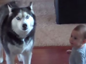 Baby Talks To Husky