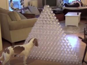 Best Dog Gift Ever